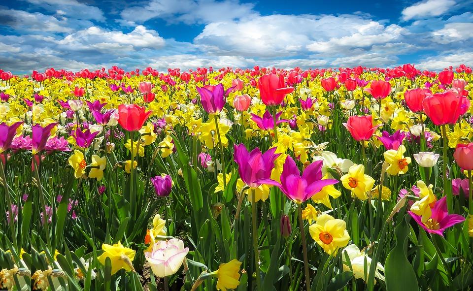 Spring (primavara) Spring-awakening-1197602_960_720